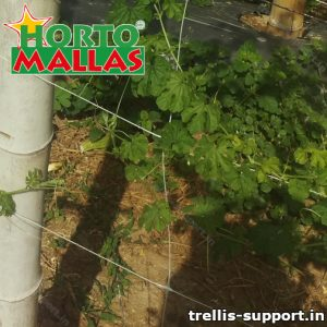 Lattice support placed on crops