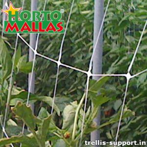 Lattice support giving protection to crops