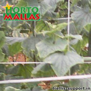 Trellis Vegetables