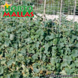 Trellis support helping the crops