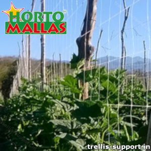 Trellis support installed in field of crops